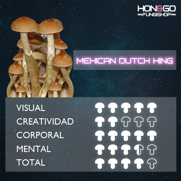 hongo psilocybe cubensis mdk mexican dutch king