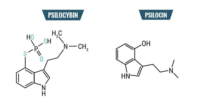 Psilocibina-vs-psilocina