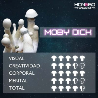 hongo psilocybe cubensis moby dick