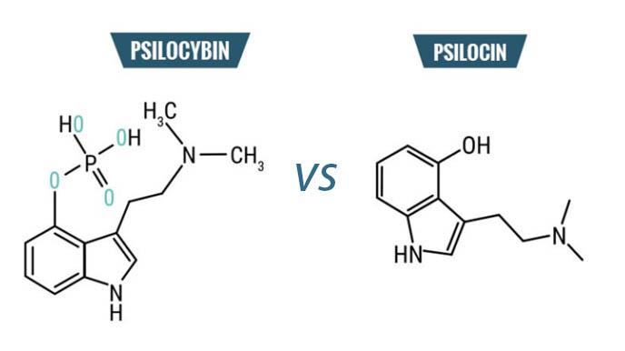 psilocibina vs