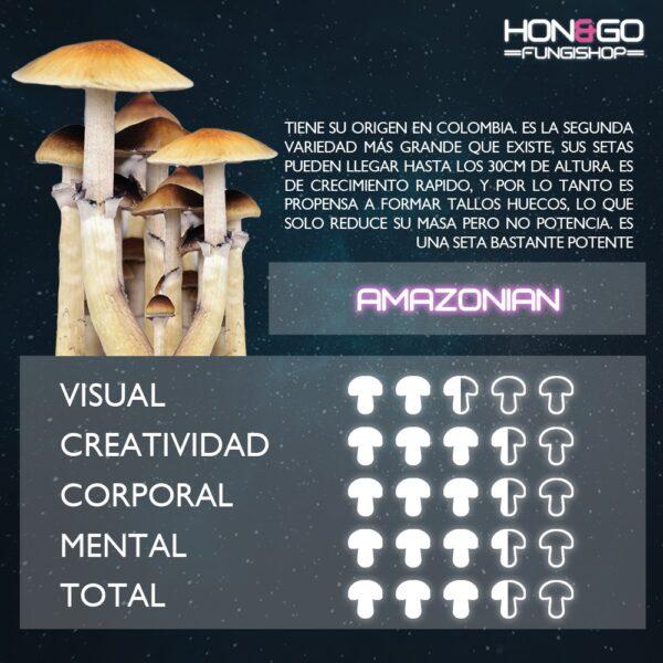 Hongo psilocibe cubensis variedad amazonian