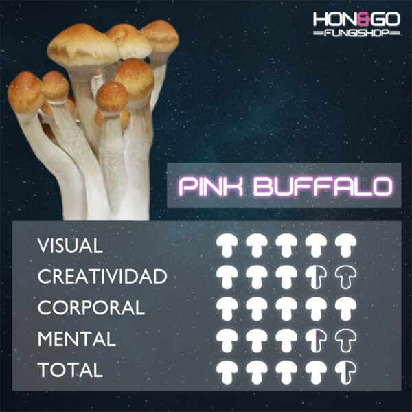 hongo psilocibe cubensis pink bufalo