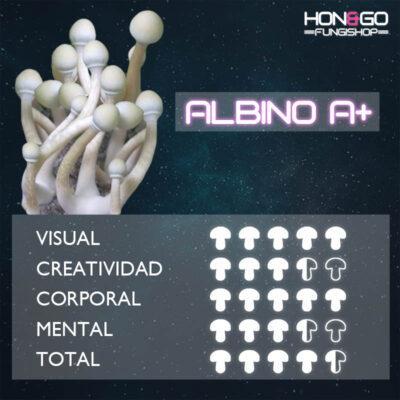 hongo cubensis Albino A+ potencia